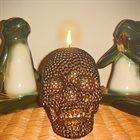 TOAD BIRTH Toad Birth & Phyllomedusa album cover