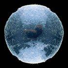 TOAD BIRTH Warm Water Wruckus album cover