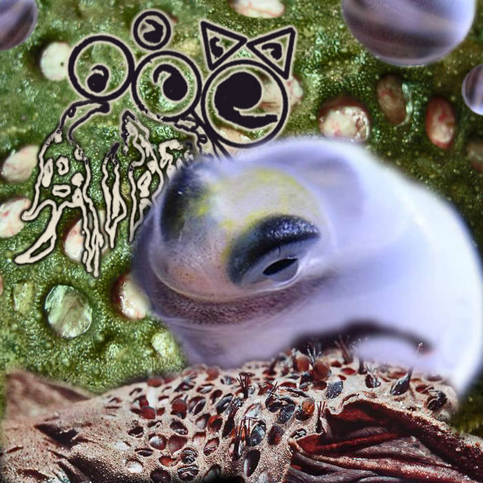 TOAD BIRTH - Envisage A Collembolans Catenator (with Adam Rotella) cover